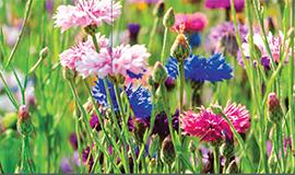 Pflanzen und Pflanzbedarf