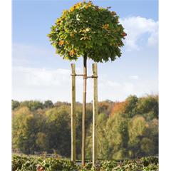 Produktbild Baumpfahl 250 cm