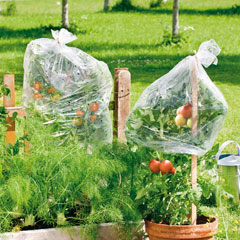 Windhager Tomaten-Folienschlauch