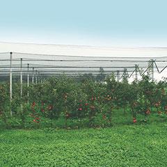 Produktbild Hagelschutz-Netz ca. 5 x 2 m